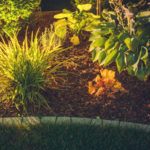 Highlight Trees & Landscaping to Give Your Business a Fresh Look